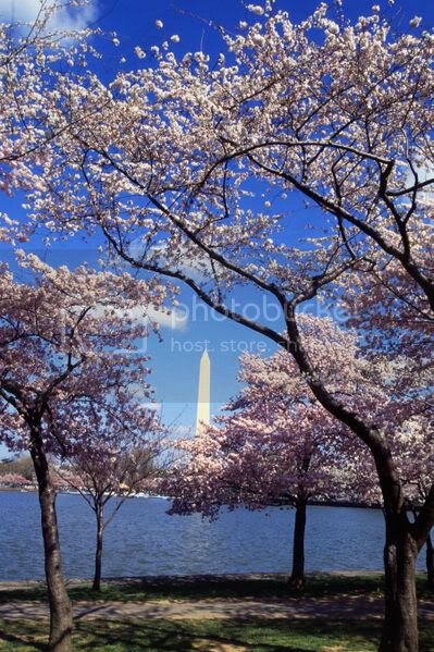 The National Cherry Blossom Festival | Mar. 27th  Apr. 11th